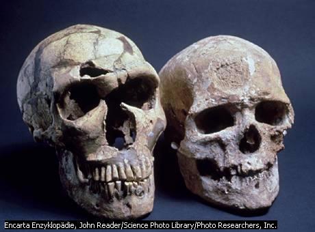 Palkan: Evolution des Menschen