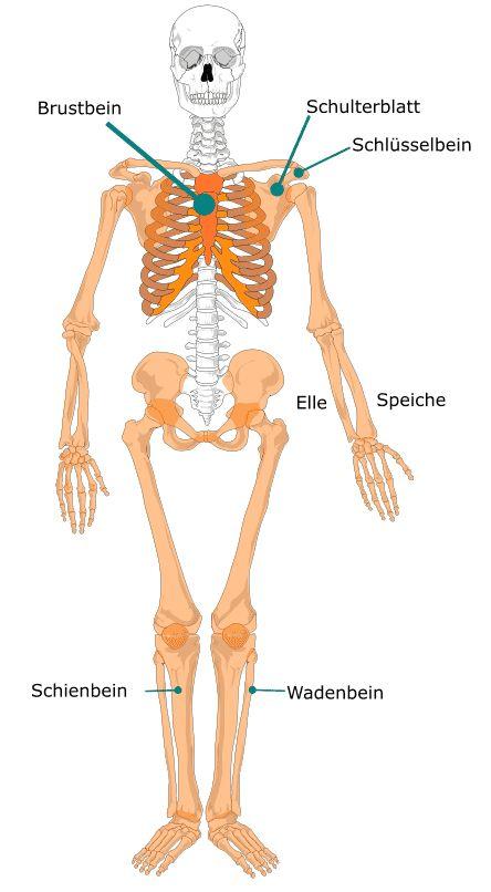 Palkan  Menschliches Skelett 821051cf6df44